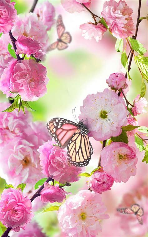 wallpaper bunga sakura bergerak koleksi gambar download wallpaper bergerak bunga terbaru