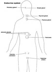 endocrine system glands images