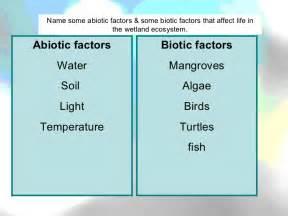 Abiotic factors water soil light temperature biotic factors mangroves