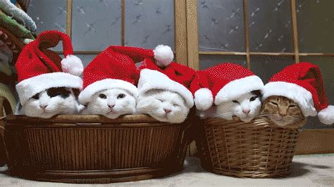 christmas animals animated animal gif find on giphy