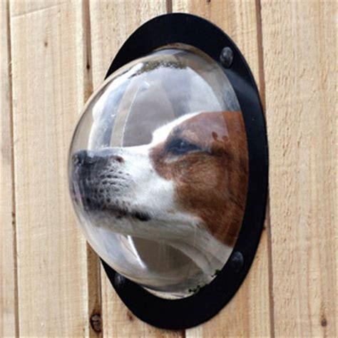 how much is that puppy in the window win it wednesday window peta s peta