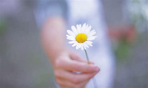 donare un fiore per una relazione felice occorre gentilezza www stile it