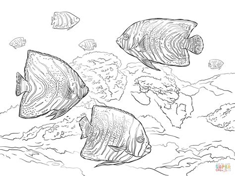 angel fish coloring pages www pixshark com images