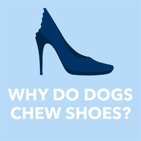 why do dogs chew why does my chew my shoes tails