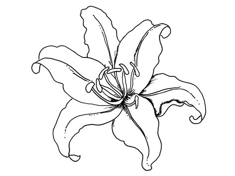 printable tropical flowers tropical flower coloring pages to print color bros