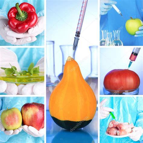definicion de alimentos transgenicos laboratorio de ingenier 237 a gen 233 tica concepto de alimentos
