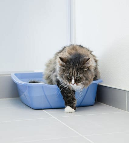 why does my cat poop in the bathtub why does my cat go potty outside the litter box