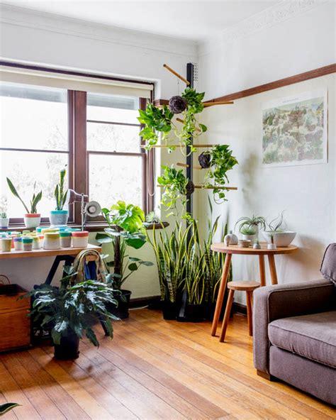 pop plant  design files australias  popular