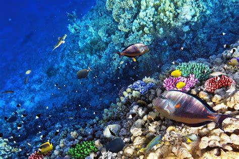 treasure island book report molokini amp turtle town snorkel tour aqua adventure the