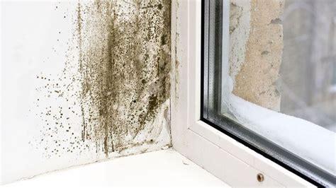 muffe sui muri interni come eliminare la muffa tecniche fai da te consigli