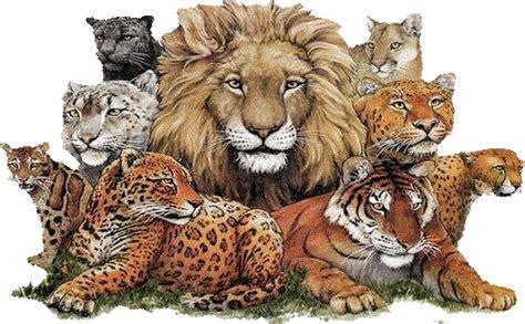 biografia de animal mi biografia semana de la vida animal