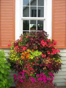 Window Plant Pots Late Summer Window Boxes From Thrifty Decor