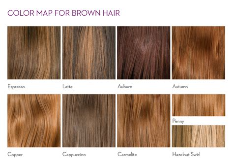 brown hair color chart light chestnut brown hair color chart www imgkid