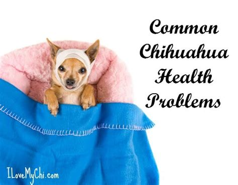 7 Health Conditions That Hit Dogs by Common Chihuahua Health Problems I My Chi
