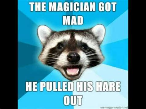 Bad Pun Raccoon Meme - pun racoon collection ocremix music youtube