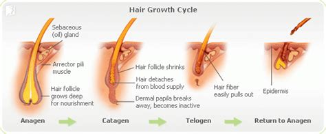 how to strengthen hair follicles in females over 40 about hair loss symptom during menopause 34 menopause