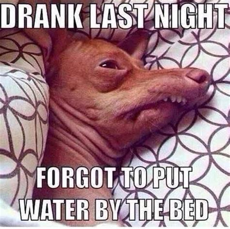 Hungover Meme - 17 best images about tuna the dog on pinterest the