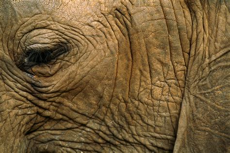 with wrinkles why are elephants and other animals so wrinkly
