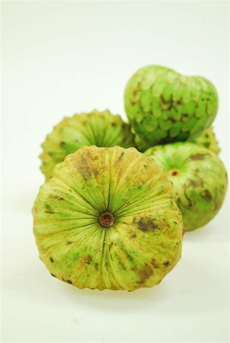 b fruit x cherimoya a cross between guyabano and atis in its