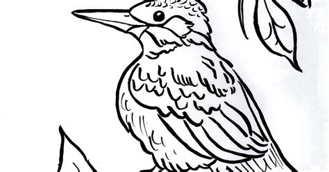 kingfisher coloring pages kingfisher coloring page samantha bell