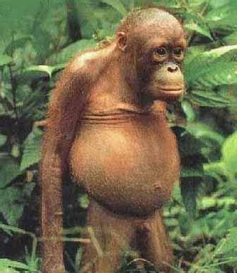 imagenes comicas de monos fotos de humor y divertidas monos animales monos 13