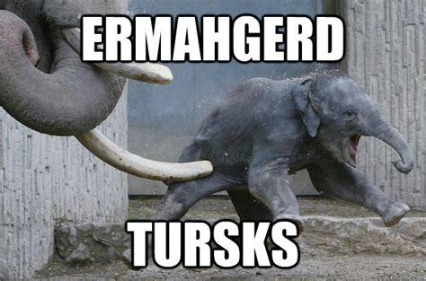 Elephant Memes - ermahgerd tursks ermahgerd elephant quickmeme