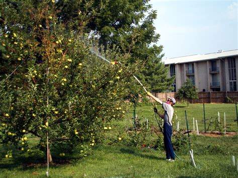 when should you spray fruit trees tree service in ma nh tree service for ma nh tree