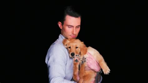 adam levine golden retriever our gift to you puppies cus