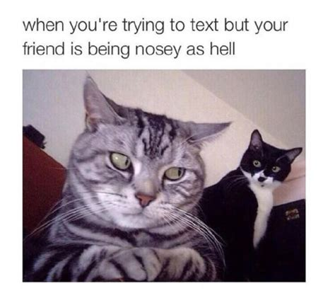 Funny As Hell Meme - the nosey friend pictures photos and images for facebook