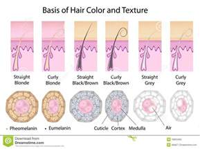 cross section of different hair texture and color royalty
