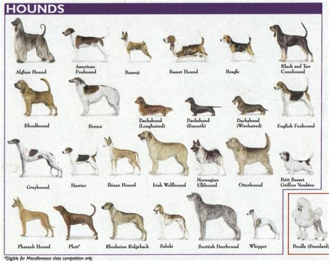 types of dogs is rex a dog dog breeds