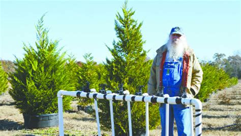 covington christmas tree farm local farm offers eco friendly live trees the andalusia news