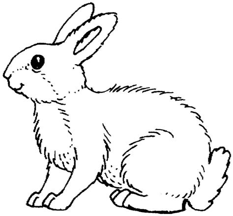 Land Animals To Color Rabbit Coloring Page