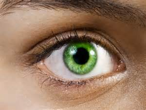 green eye color common eye colours of human beings
