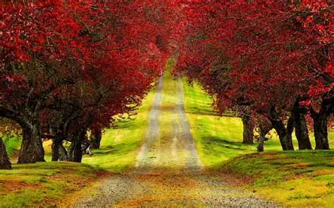 red trees path wallpapers red trees path stock