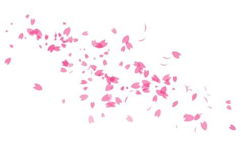 image gallery sakura petals