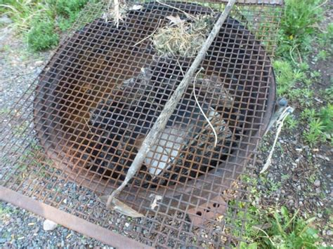 metal grate for pit including tractor tire pit hoe and metal