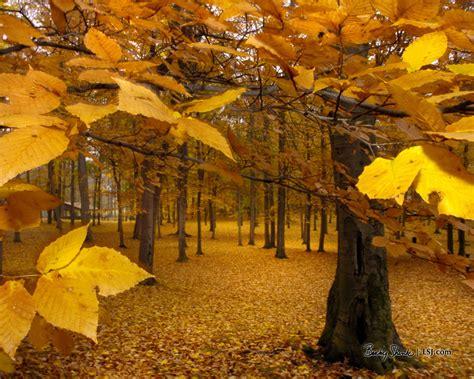 yellow leaves autumn wallpaper 393324 fanpop