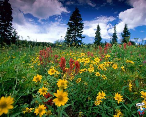 ci fioriti immagini prati fioriti 42 immagini in alta definizione hd