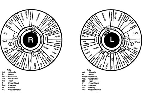printable iridology eye chart let s discover my health issues tell my fortune and