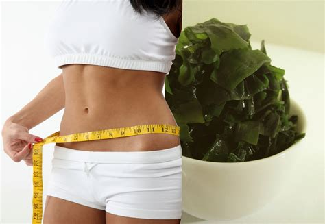 Algae Weight Loss Detox by Seaweed Benefits Weight Loss Benefits Of Binge