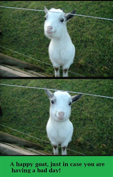 Happy Goat Meme - a happy goat just in case you are having a bad day the