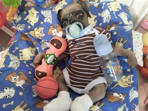 reborn pugs for sale 17 best images about crickets and lace reborn nursery on on what