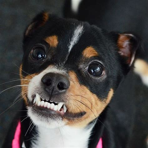 Adoptable Dogs   ASPCA