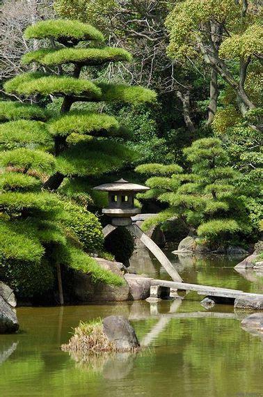 quel arbre pour un jardin japonais