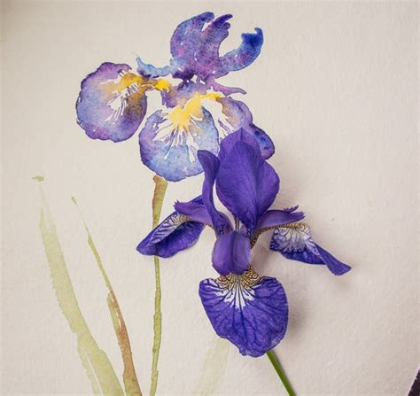 watercolor tutorial iris watercolour lesson paint an iris flower with angela fehr