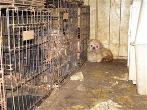 on loving animals pet stores and puppy mills animal