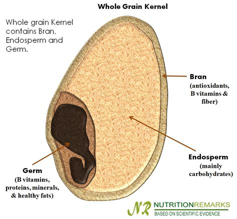 whole grains pubmed endosperm