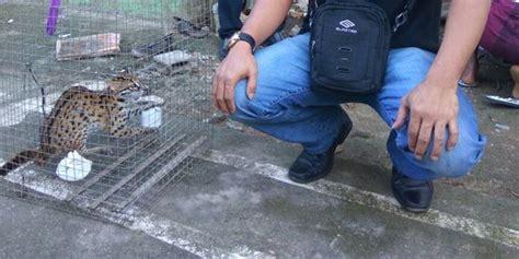 Jual Pakan Burung Dan Ikan Kabupaten Bandung Barat Jawa Barat butuh duit beli rokok asman diciduk saat jual anak kucing