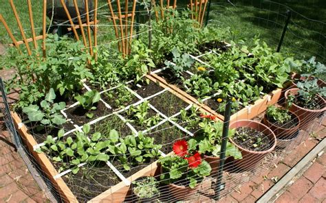 Vegetable Gardening For Beginners Guide Plant Instructions Vegetable Gardens For Beginners
